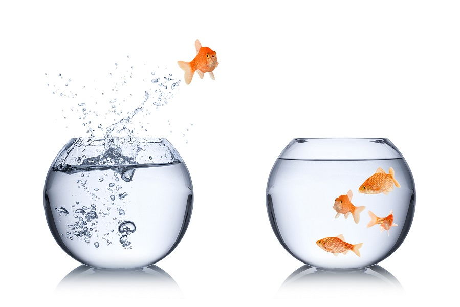 Ein Goldfisch springt in ein zweites Aquarium